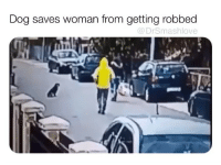 Memes, 🤖, and Dog: Dog saves woman from getting robbed  @DrSmashlove WHERE ARE THE NOBEL PRIZES FOR PUPPERS IMMA HAVE TO START THIS 😍😂😂