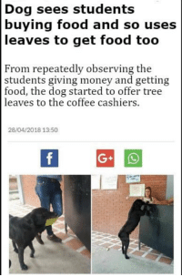 "Dogs, Food, and Money: Dog sees students  buying food and so uses  leaves to get food too  From repeatedly observing the  students giving money and getting  food, the dog started to offer tree  leaves to the coffee cashiers.  28/04/2018 13:50 <p><a href=""http://homo-siren.tumblr.com/post/173738064454/but-did-they-accept-such-a-kind-payment"" class=""tumblr_blog"">homo-siren</a>:</p>  <blockquote><p>But did they accept such a kind payment</p></blockquote>  <p>Even dogs know better than to shoplift, a feat Tumblr has yet to accomplish.</p>"