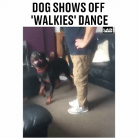 Memes, Dance, and 🤖: DOG SHOWS OFF  WALKIES' DANCE  LAD  DIOLE 'I finally got introduced to my dad's dog and he showed me his 'walkies' dance' 😂🐶