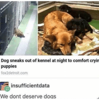 Dogs, Memes, and Puppies: Dog sneaks out of kennel at night to comfort cryin  puppies  fox2detroit.com  insufficientdata  We dont deserve dogs