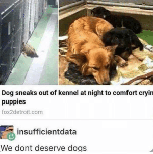 Dogs, Puppies, and Dog: Dog sneaks out of kennel at night to comfort cryin  puppies  fox2detroit.com  insufficientdata  We dont deserve dogs The feels