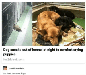 So cute by Hades_XC MORE MEMES: Dog sneaks out of kennel at night to comfort crying  puppies  fox2detroit.com  insufficientdata  We dont deserve dogs So cute by Hades_XC MORE MEMES