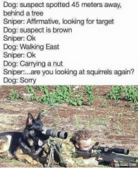 9gag, Dogs, and Soldiers: Dog: suspect spotted 45 meters away,  behind a tree  Sniper: Affirmative, looking for target  Dog: suspect is brown  Sniper: Ok  Dog: Walking East  Sniper: Ok  Dog: Carrying a nut  Sniper:...are you looking at squirrels again?  Dog: Sorry  VIA 9GAG COM How many likes for our soldiers?