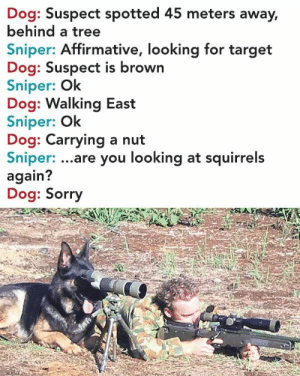 Funny, Lol, and Sorry: Dog: Suspect spotted 45 meters away,  behind a tree  Sniper: Affirmative, looking for target  Dog: Suspect is brown  Sniper: Ok  Dog: Walking East  Sniper: Ok  Dog: Carrying a nut  Sniper: ...are you looking at squirrels  again?  Dog: Sorry He is a good SpotterLOL via /r/funny https://ift.tt/2Nhrdfx