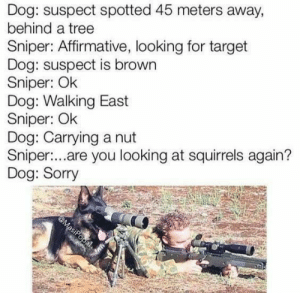 Damn squirrel: Dog: suspect spotted 45 meters away,  behind a tree  Sniper: Affirmative, looking for target  Dog: suspect is brown  Sniper: Ok  Dog: Walking East  Sniper: Ok  Dog: Carrying a nut  Sniper:...are you looking at squirrels again?  Dog: Sorry  @MasiPopal Damn squirrel