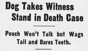 Target, Tumblr, and Blog: Dog Takes Witness  Stand in Death Case  Pooch Won't Talk but Wags  Tail and Bares Teeth. yesterdaysprint: Indian Valley Record, Greenville, California, February 19, 1948