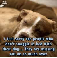 snuggle bear: Dog  Talks  feel sorry for people who  don't snuggle in bed with  their dog... They are missing  out on so much love!