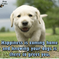 Memes, Happy, and Home: Dog  Talks  Happiness is coming home  and knowing your dogs (s  there to greet you