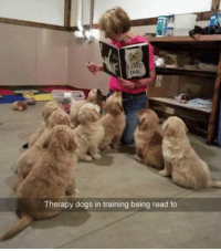 Follow me @antisocialtv @lola_the_ladypug @x__social_butterfly__x @x__antisocial_butterfly__x: DOG  Therapy dogs in training being read to Follow me @antisocialtv @lola_the_ladypug @x__social_butterfly__x @x__antisocial_butterfly__x