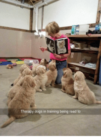 "Dogs, Memes, and 🤖: DOG  Therapy dogs in training being read to ""what kind of job do you want?"" me: https://t.co/utD0RcnDoM"