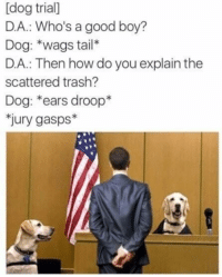 "Memes, Trash, and Good: [dog trial]  D.A.: Who's a good boy?  Dog: *wags tail*  D.A.: Then how do you explain the  scattered trash?  Dog: *ears droop*  jury gasps* <p>Dog wags tail. via /r/memes <a href=""https://ift.tt/2JKl7ll"">https://ift.tt/2JKl7ll</a></p>"