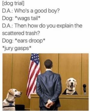 Trash, Good, and Boy: [dog trial]  D.A.: Who's a good boy?  Dog: *wags tail*  D.A.: Then how do you explain the  scattered trash?  Dog: *ears droop*  jury gasps* Dog wags tail. (i.redd.it)