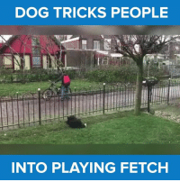 This dog is strategically playing with everyone that passes by! via - JukinMedia: DOG TRICKS PEOPLE  INTO PLAYING FETCH This dog is strategically playing with everyone that passes by! via - JukinMedia