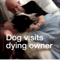 A terminally-ill man had his dying wish granted when his dog was allowed to make a final visit to his hospital bedside hours before he passed away. Infection control regulations mean animals are only allowed into hospitals under exceptional circumstances. hospital dogs mansbestfriend bbcnews dundee bordercollie: Dog visits  dying owner A terminally-ill man had his dying wish granted when his dog was allowed to make a final visit to his hospital bedside hours before he passed away. Infection control regulations mean animals are only allowed into hospitals under exceptional circumstances. hospital dogs mansbestfriend bbcnews dundee bordercollie