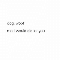 Memes, 🤖, and Dog: dog: woof  me: i would die for you