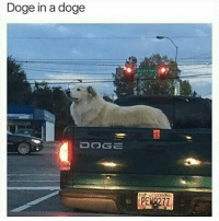 Doge, Dog, and Dogging: Doge in a doge  DOG