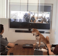 Ceo, Day, and Dogecoin: Dogecoin CEO becoming hysterical on the day of release of Dogecoin (2013 AD)