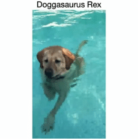 Dinosaur, Memes, and 🤖: Doggasaurus Rex Footage of a new dinosaur!! @codythelabrador