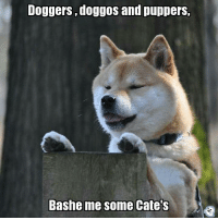 Doge needs you all ~Mrs.Doge: Doggers doggoS and puppers,  Bashe me Sonne Cate S Doge needs you all ~Mrs.Doge