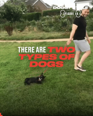 There are two types of dogs on this planet...😂🐶: DOGGH  THERE ARE O  PES OF  DOGS There are two types of dogs on this planet...😂🐶