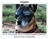 Army, Afghanistan, and Belgian: Doggles  A U.S. Army Belgian Malinois wearing Doggles to protect his  eyes from dust in Afghanistan