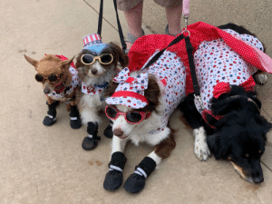 Irl, Dog IRL, and Ace: DOGGLES  ACE  DHADETU  www  SERVIC  ILS2  DOGGLES Woof_irl