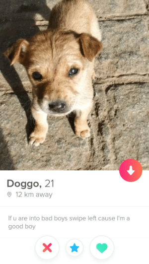 "tinderventure:""True love doesn't exis-: Doggo, 21  O 12 km away  If u are into bad boys swipe left cause I'm a  good boy tinderventure:""True love doesn't exis-"