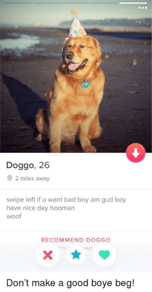 Can't wait!!!: Doggo, 26  2 miles away  swipe left if u want bad boy am gud boy  have nice day hooman  woof  RECOMMEND DOGGO  TO  ND  Don't make a good boye beg! Can't wait!!!