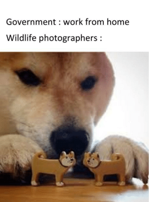 Doggo and meme: Doggo and meme