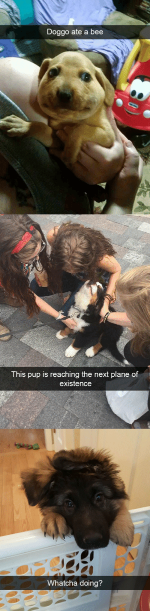 animalsnaps:Dog snaps: Doggo ate a bee   This pup is reaching the next plane of  existence   Whatcha doing?  CA animalsnaps:Dog snaps