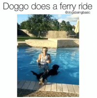 Memes, Twitter, and Good: Doggo does a ferry ride  @dogsbeingbasic Must have had a good fur day and didn't wanna get it wet. Via twitter catherine_h0