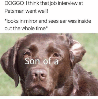 Funny, Inside Out, and Job Interview: DOGGO: I think that job interview at  Petsmart went well!  치ooks in mirror and sees ear was inside  out the whole time  Son of a @davie_dave