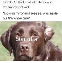 Funny, Inside Out, and Job Interview: DOGGO: I think that job interview at  Petsmart went well!  *looks in mirror and sees ear was inside  out the whole time  Son of a Idiot