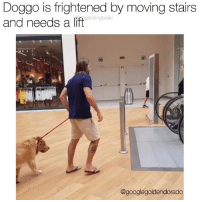 Memes, Pup, and 🤖: Doggo is frightened by moving stairs  and needs a lift  gsbeingbasic  @googlegoldendorado Halp, moving stairs cause a fright. Plz carry. Pup @googlegoldendorado