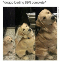 """Doggo, Loading, and  Almost: """"doggo loading 89% complete"""" Almost..."""
