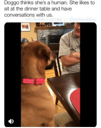 (Sound on 🔊) IF U ARE SAD AND NEED HAPPINESS LITERALLY WATCH THIS IMMACULATE VIDEO AND LET YOUR HEART SMILE I LOVE THIS 😍😂😂: Doggo thinks she's a human. She likes to  sit at the dinner table and have  conversations with us.  vid: Reddit u/gFiskj  DrSmashlove  VIC (Sound on 🔊) IF U ARE SAD AND NEED HAPPINESS LITERALLY WATCH THIS IMMACULATE VIDEO AND LET YOUR HEART SMILE I LOVE THIS 😍😂😂