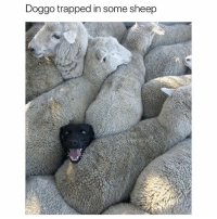 Funny, I Bet, and Ted: Doggo trapped in some sheep I bet that tail is trying to wag so hard (@hilarious.ted)