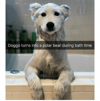 Funny, Bear, and Time: Doggo turns into a polar bear during bath time Doggo snaps