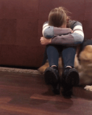 doggos-with-jobs: A guide dog practicing cheering their human up: doggos-with-jobs: A guide dog practicing cheering their human up