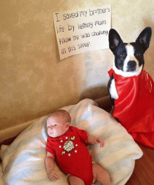 doggos-with-jobs:  Because that's what heroes do….: doggos-with-jobs:  Because that's what heroes do….