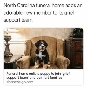 doggos-with-jobs:  Every funeral home needs one: doggos-with-jobs:  Every funeral home needs one
