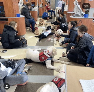 doggos-with-jobs:  Good boys lined up to help scared kiddos at the dentist (photo borrowed from one of my dental school classmates): doggos-with-jobs:  Good boys lined up to help scared kiddos at the dentist (photo borrowed from one of my dental school classmates)