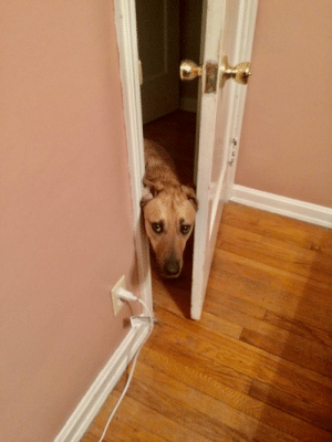 doggos-with-jobs:  He thinks his job is to constantly check on me. What a good boy!: doggos-with-jobs:  He thinks his job is to constantly check on me. What a good boy!