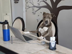 doggos-with-jobs:  Just a hooman working from home!: doggos-with-jobs:  Just a hooman working from home!
