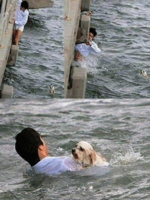 doggos-with-jobs:Man going to work jumps off a bridge when seeing a dog drowning, he thought the life of an animal was more important than a day of work. 👏👏: doggos-with-jobs:Man going to work jumps off a bridge when seeing a dog drowning, he thought the life of an animal was more important than a day of work. 👏👏