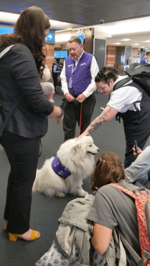 Aww, Tumblr, and Blog: doggos-with-jobs:  She halp the peoples be calm before the flights  Aww