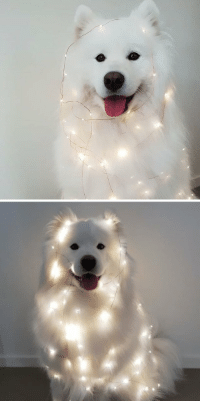Tumblr, Blog, and Com: doggosource: day and night