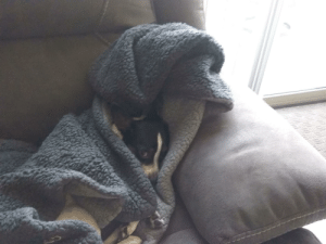 Doggy blanket cave: Doggy blanket cave