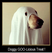 """. Yes, GOO-Licious Treat >  Not Itchy Allergy Tricks !  Itchy Canine Allergies can be Very Scarry !  Constant Itching / Gunky Ears / Hot Spots / Paw Chewing ?  It is ALLERGY Season for Man / Woman and Our DOGs.  80+% of our Itchy Dog's = ENVIRO Allergy to the Same Grass, Tree, Weed Pollens / Dust Mites / Molds that Us Humans Suffer From.  Time to STOP Masking Symptoms with Pharma, which leave Your Dog's Allergy Fire """"Intact"""" > only to Burn Brighter & Hotter with EveryDay !  Time to Target the Source of Your Dog's Immune Mis-Wiring / Allergy Disease.   Time to Fight Your Dog's Allergies > From the InSide > Out !  How ?  DVM Dermatologist Formulation Supported by Science and Clinical Evidence  YES ! You can Build heightened """" Internal"""" Immune Tolerance to 15 Major Enviro Sources, with the Doggy GOO Goal that over a Modest Amount of Time, """"External"""" Allergy Symptoms are No Longer Triggered !  Best of All .. Doggy GOO is a 100% Natural / GOO-Licious Peanut Butter Treat !  }}} Time to Visit . www.DoggyGOO.com  } Read > GOOD NEWs ! My Dog is on [Allergy] DRUGs !  .  http://2gzm2.r.ca.d.sendibm2.com/bzbcn6n7ygbf.html  } Read Testimonials > What other Pet Parents have to say about their Dog's Doggy GOO Experience …  . http://www.DoggyGOO.com/Testimonials/Index.aspx  } Click Below Link to READ How Doggy GOO is Your Best Allergy Fighting Option !  . http://sh1.sendinblue.com/na0l2nhfsc.html  }} Help Your 24 / 7 / 365 Itchy SAD Dog ..  . Time to Help Your DVM $$ PocketBook  .    Time for www.DoggyGOO.com  / Call  855 – 2467 – 2426  .: Doggy GOO-Licious Treat! . Yes, GOO-Licious Treat >  Not Itchy Allergy Tricks !  Itchy Canine Allergies can be Very Scarry !  Constant Itching / Gunky Ears / Hot Spots / Paw Chewing ?  It is ALLERGY Season for Man / Woman and Our DOGs.  80+% of our Itchy Dog's = ENVIRO Allergy to the Same Grass, Tree, Weed Pollens / Dust Mites / Molds that Us Humans Suffer From.  Time to STOP Masking Symptoms with Pharma, which leave Your Dog's Allergy Fire """"Inta"""