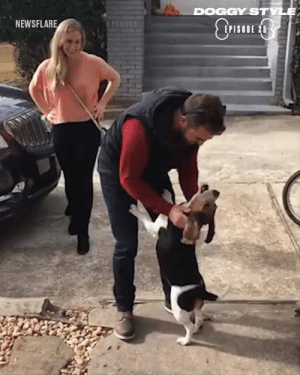 Dank, Dogs, and Been: DOGGY STYL  NEWSFLARE  EPISODE 25 Whether they've been apart for an hour or a year, nothing makes dogs happier than being reunited with their owners 🐶